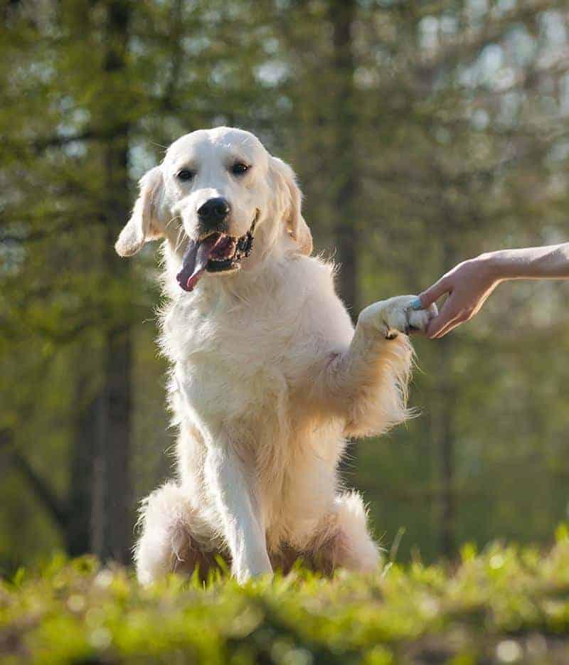 Jak mogę uchronić zwierzaka przed nowotworem?