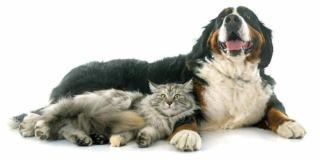 Które zwierzęta są najbardziej narażone?