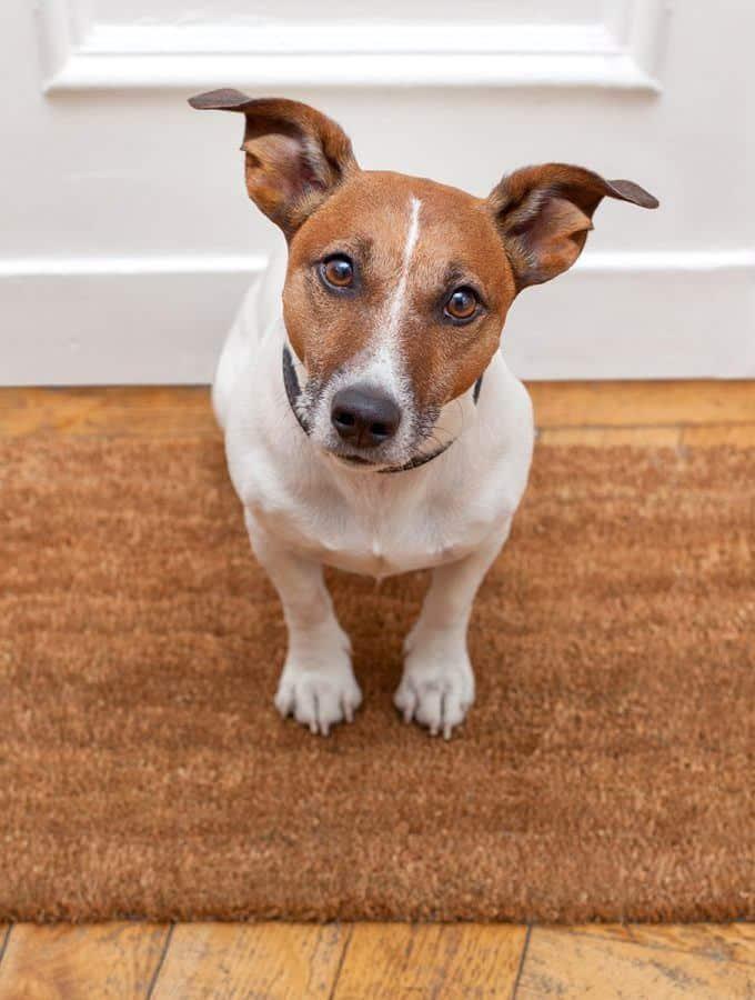 Lęk separacyjny u psa