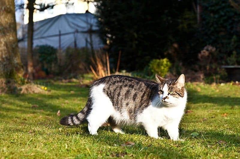 anemia kota kleszcze