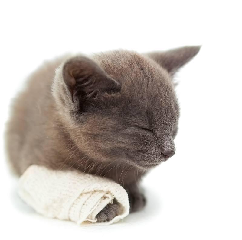 Jakie mogą być przyczyny anemii u kota?