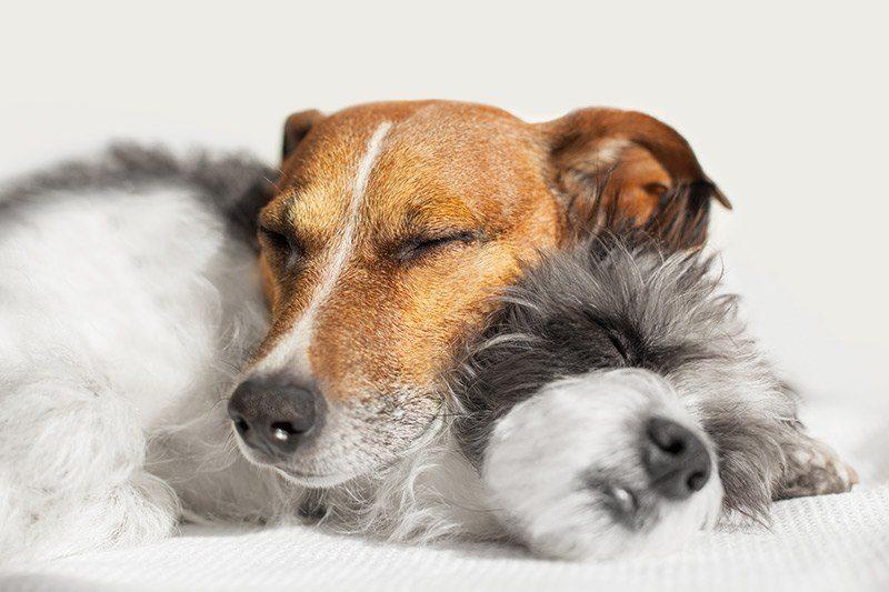 Bezpieczne legowisko dla psa