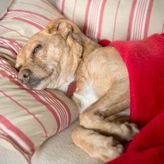 Choroby prostaty u psów