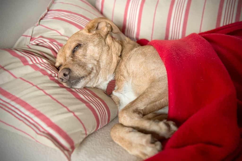 badanie prostaty u psa
