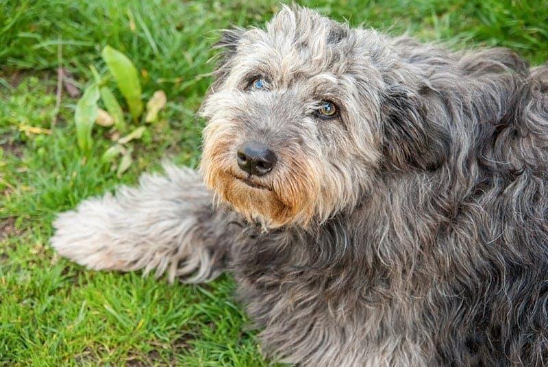 Choroby stercza u psów