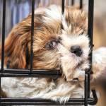 Dyskopatia u psa: jak ją leczyć i ile kosztuje operacja dyskopatii u psa?