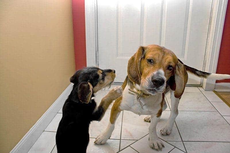 Lęk separacyjny a drugi pies