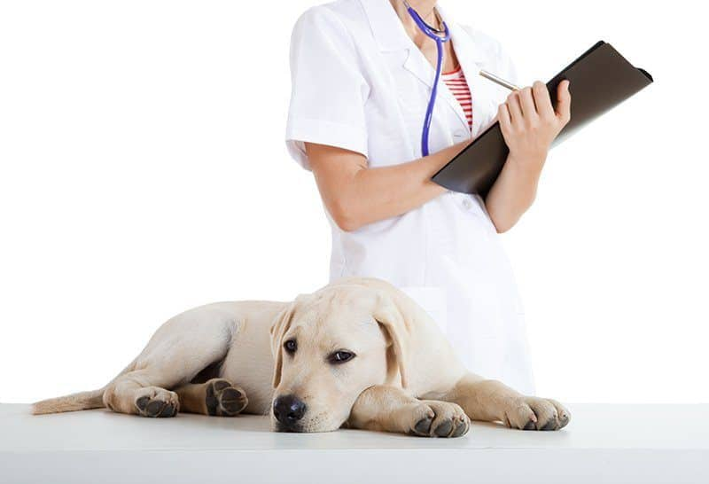 Lęk separacyjny u psa leczenie