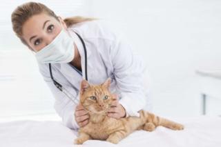 Nadczynność tarczycy u kota