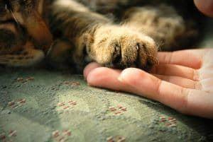 Jak udzielić kotu pierwszej pomocy? Postępowanie krok po kroku