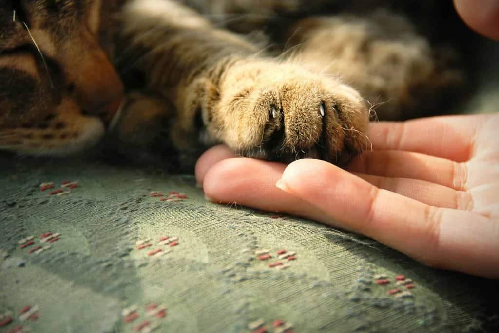 Pierwsza pomoc u kota