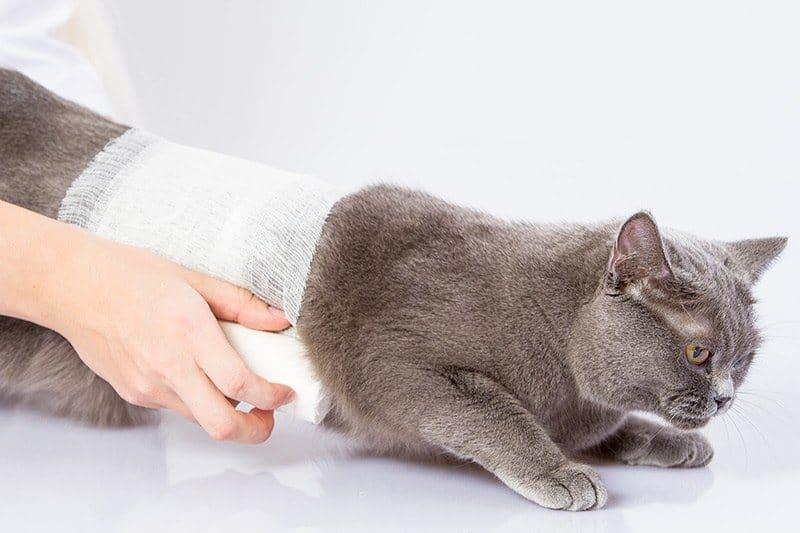 Pierwsza pomoc przy głębokich ranach u kota