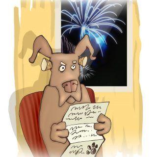 Co zrobić kiedy pies boi się fajerwerków?