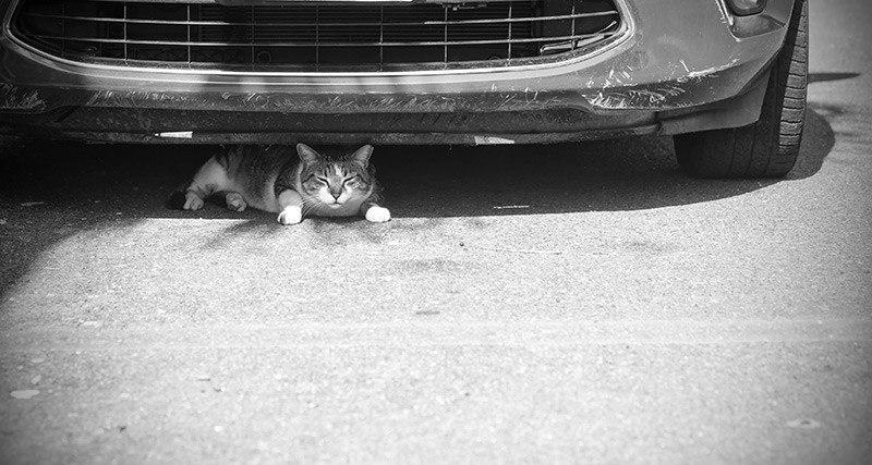 Pierwsza pomoc przy potrąceniu kota przez samochód
