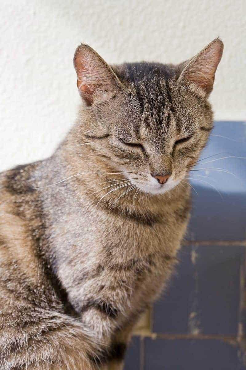 Jak sprawdzić reaktywność kota