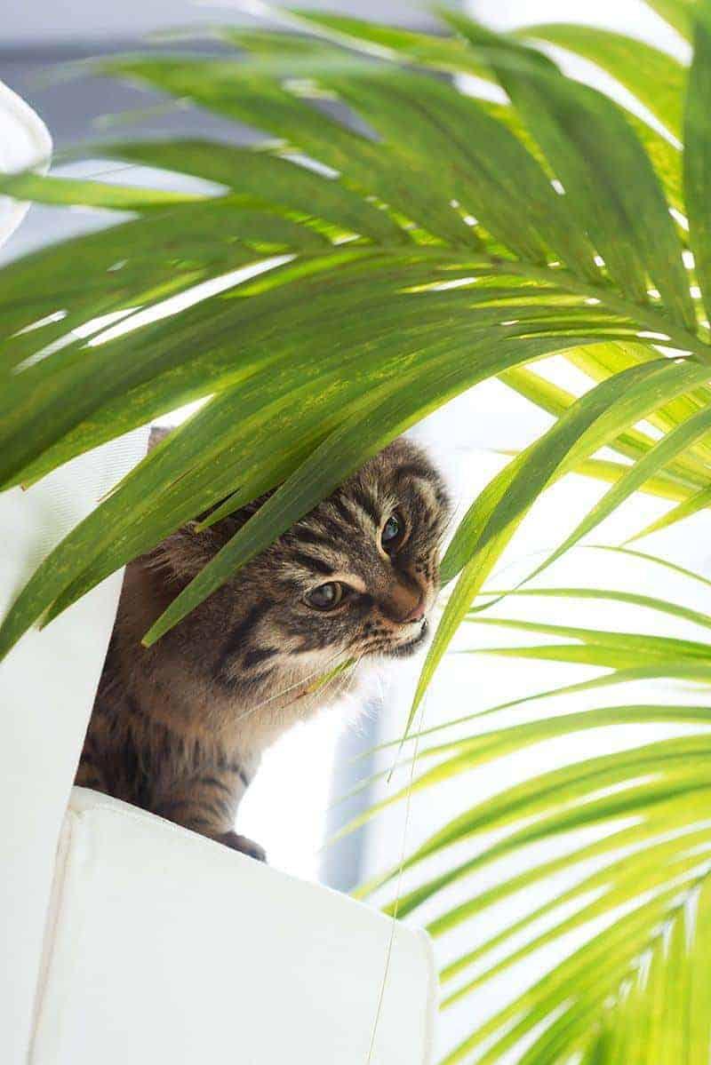 Trujące dla kota rośliny
