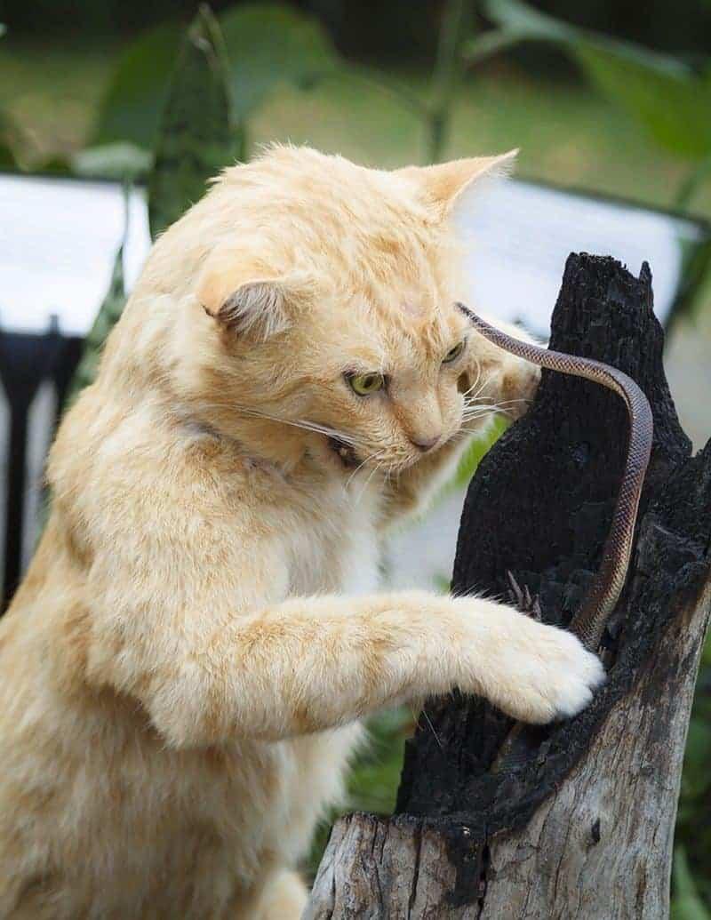 Co zrobić kiedy kota ugryzie wąż?