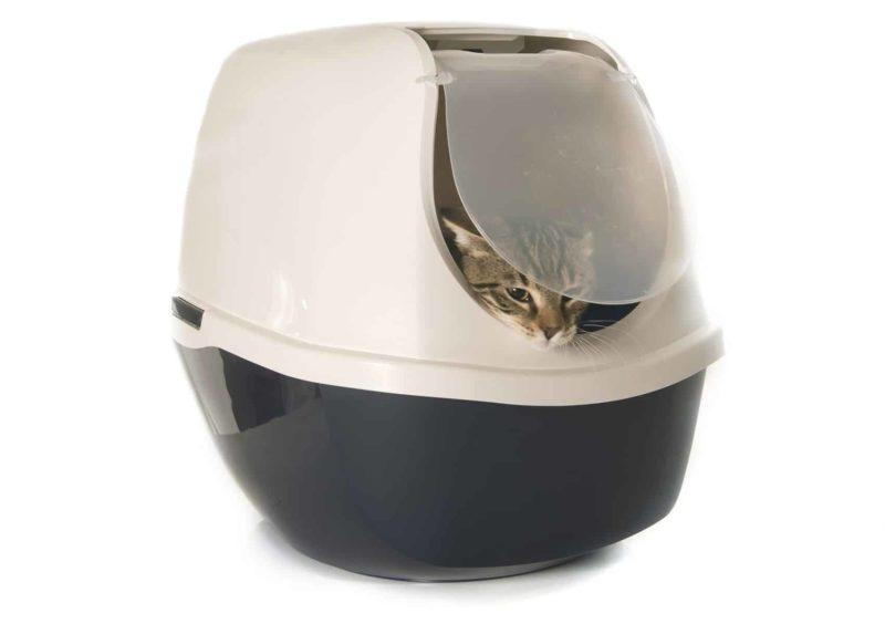 Zaparcia u kota: co stosować i jak leczyć megacolon
