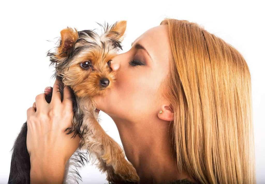 Choroby, którymi człowiek może zarazić psa