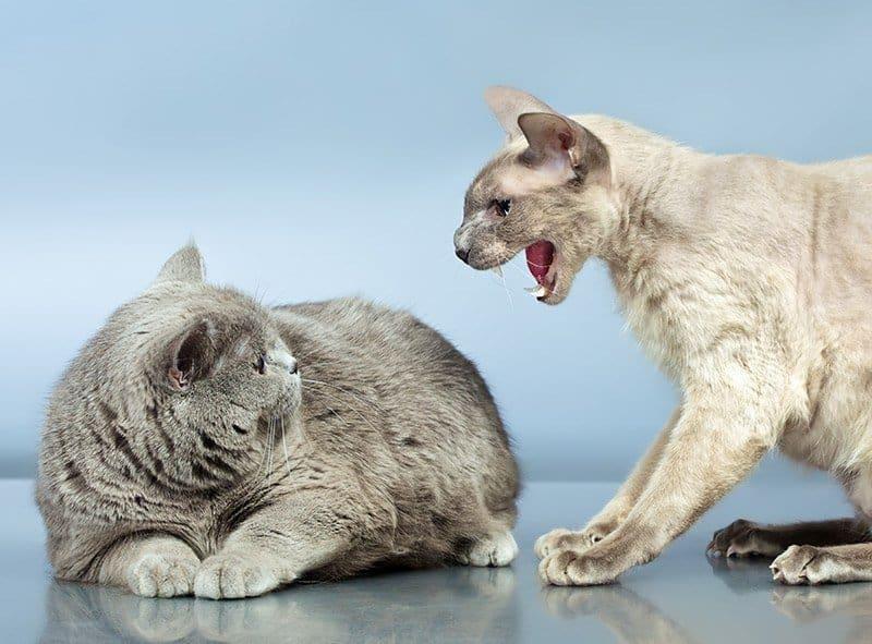 Agresja u kota - rodzaje