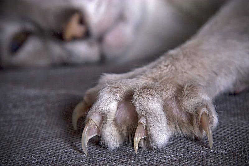 Jak uspokoić agresywnego kota?