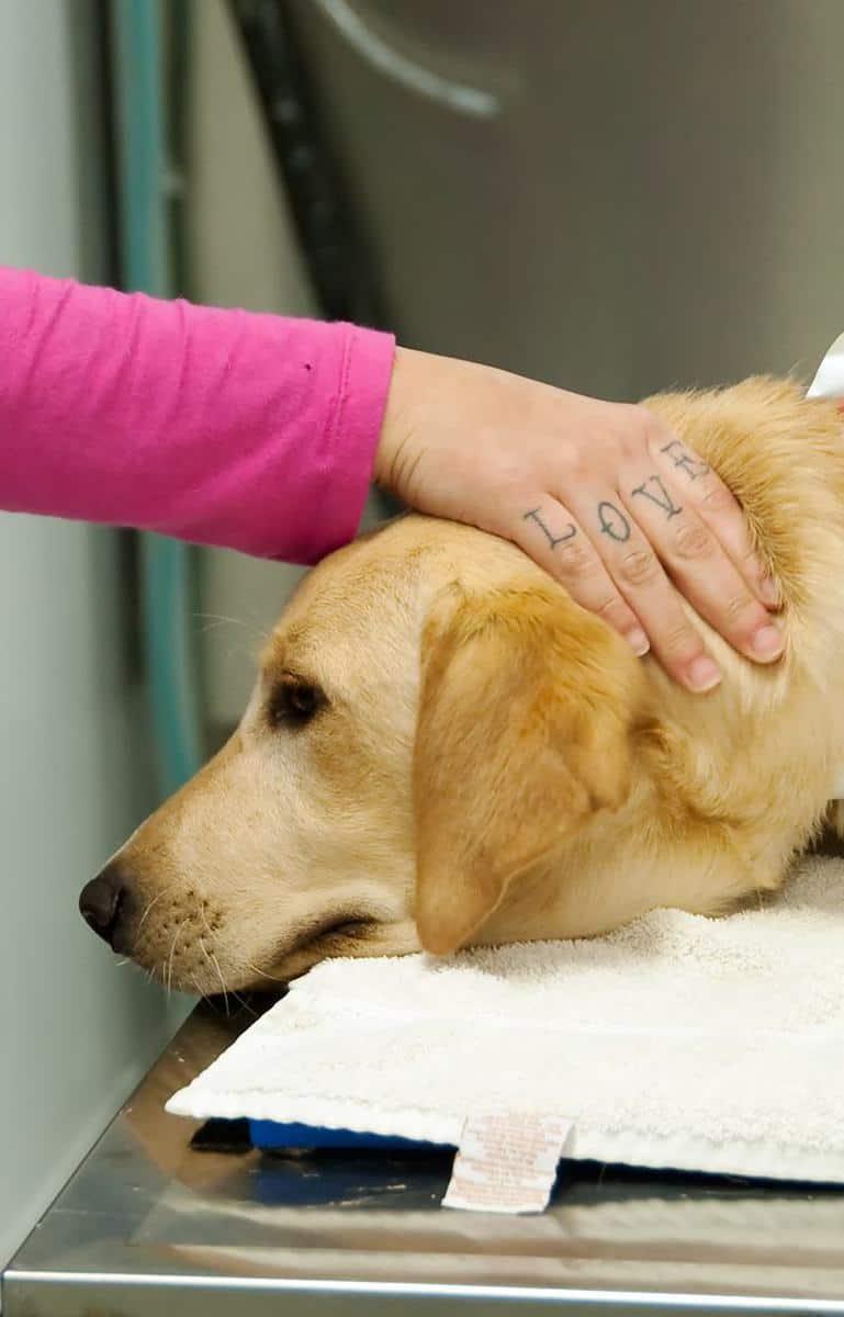 Kostniakomięsak u psa rokowania
