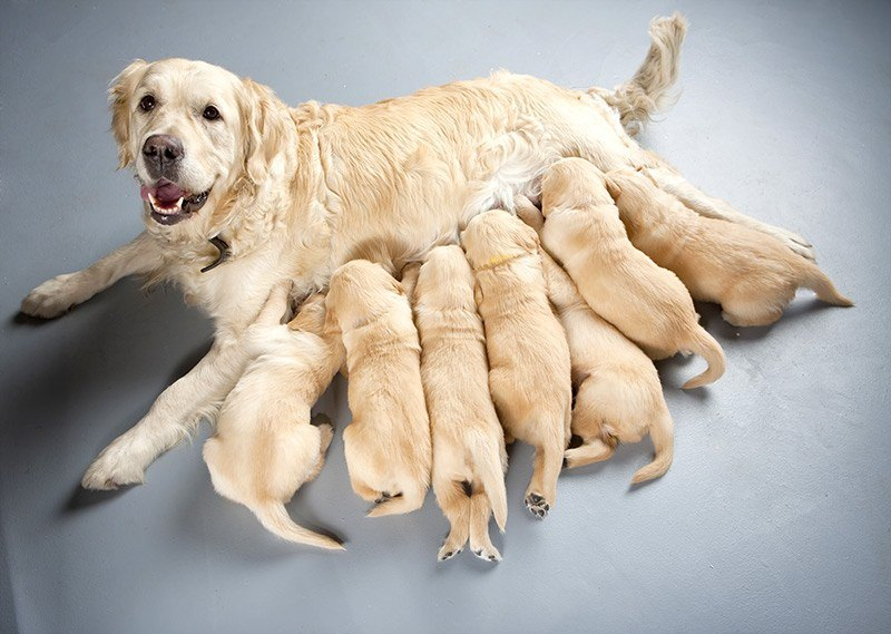 Jak przebiega poród?