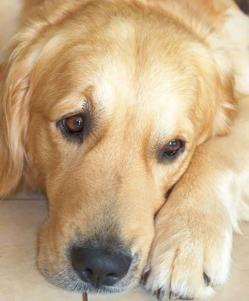 rasy psów rak kości