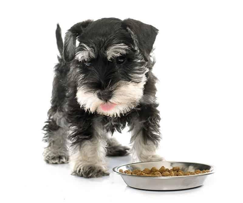 Zapalenie trzustki u psa dieta