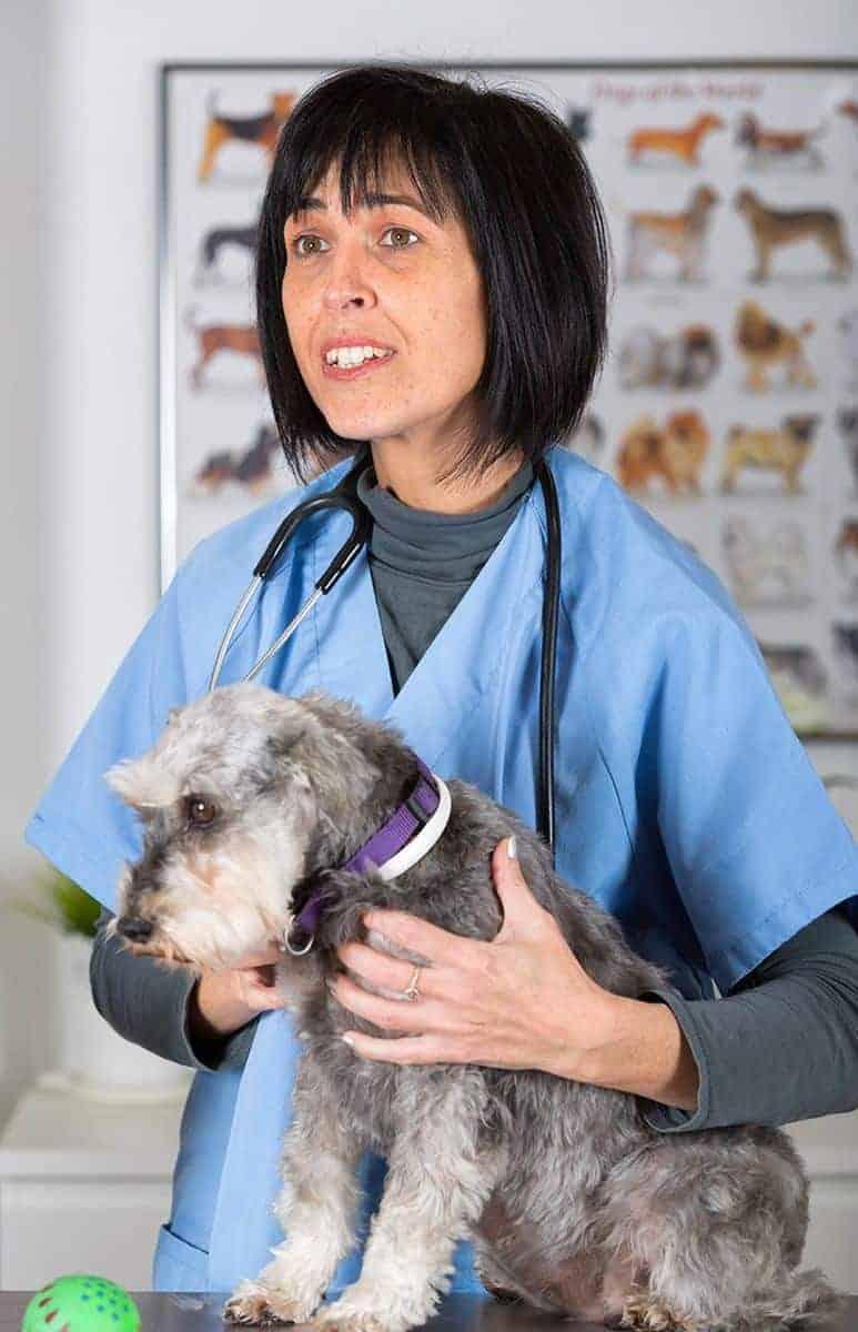 Zapalenie Trzustki U Psa Objawy Leczenie I Rokowania