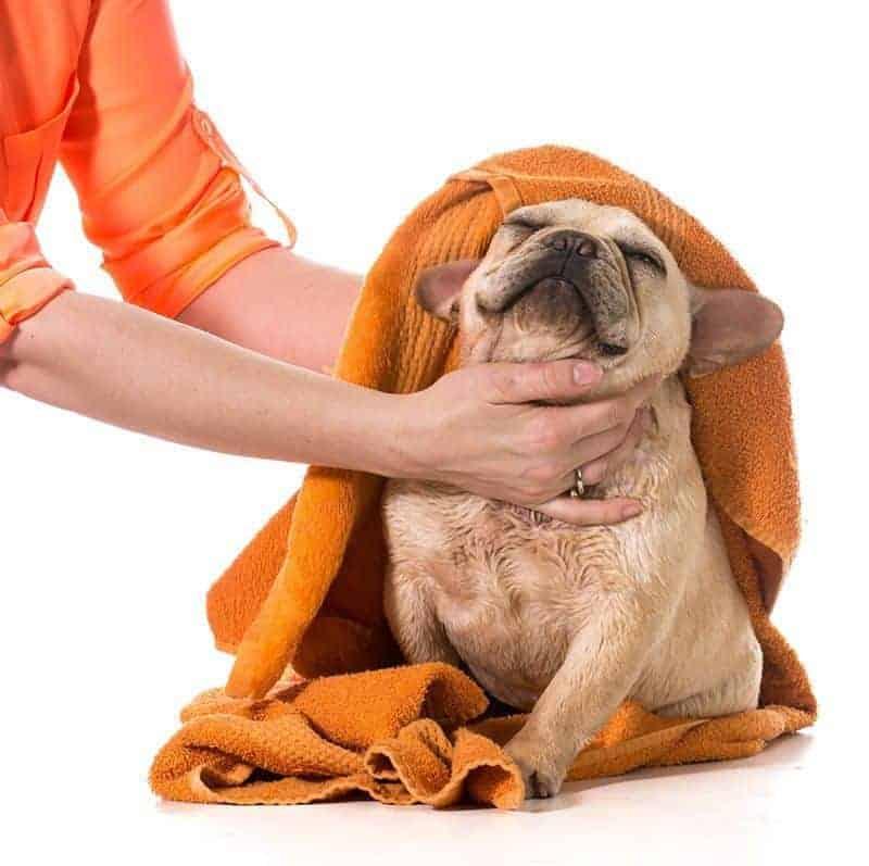 Jak pielęgnować te psy?
