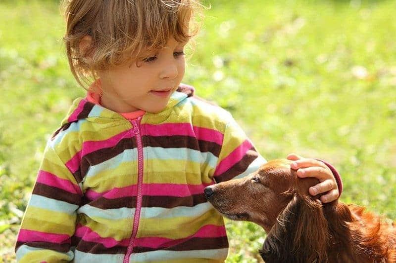 Czy warto zdecydować się na psa tej rasy?