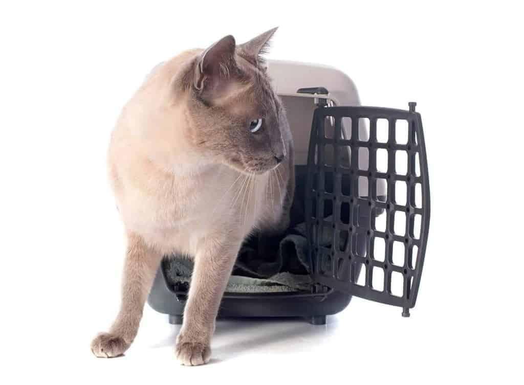 Ile żyje kot syjamski?