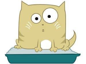Kuweta dla kota: ile kosztuje gdzie postawić i co wsypać do kociej kuwety