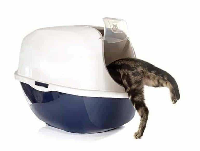 Kuweta dla kota zamykana