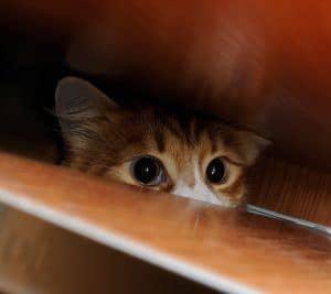 Jak oswoić kota: oswajanie małego kotka i jak oswoić dzikiego kota?