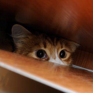 Jak oswoić kota?