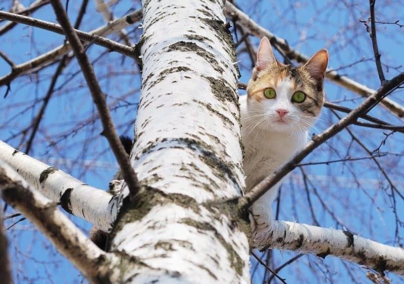 Jak zachowuje się nieoswojony kot?