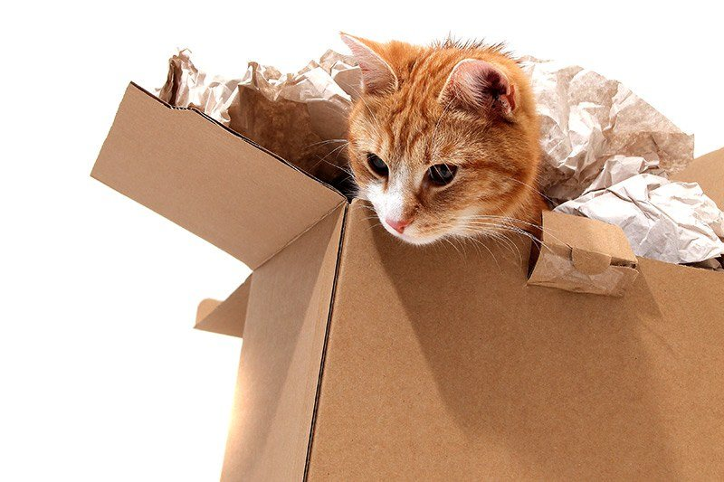 Jak Oswoić Kota Oswajanie Małego Kotka I Jak Oswoić Dzikiego Kota