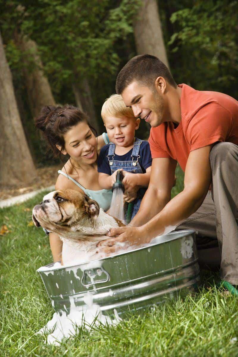Szampon dla psa: kiedy warto stosować szamponoterapię?