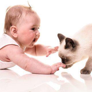 Dziecko i kot w domu