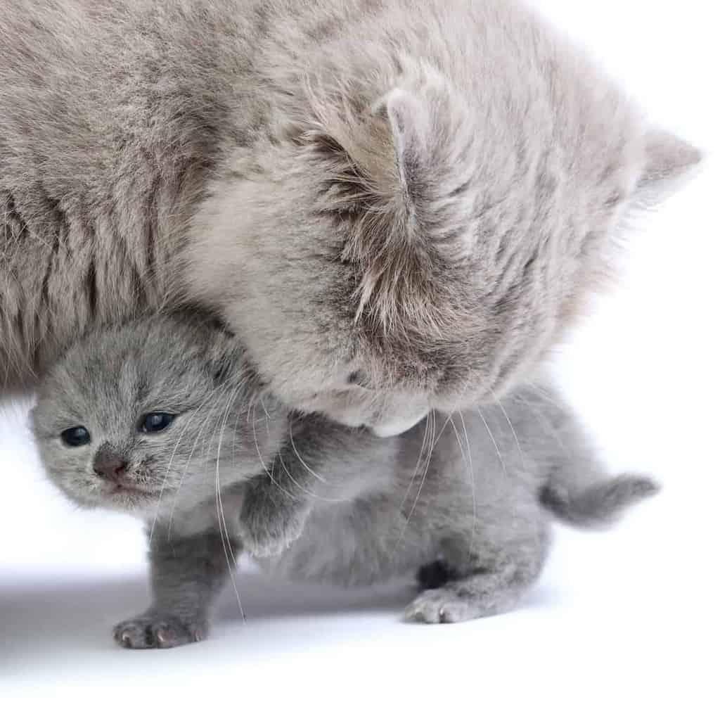 Rozwój Kota Jak Się Opiekować I Czym Karmić Małego Kotka