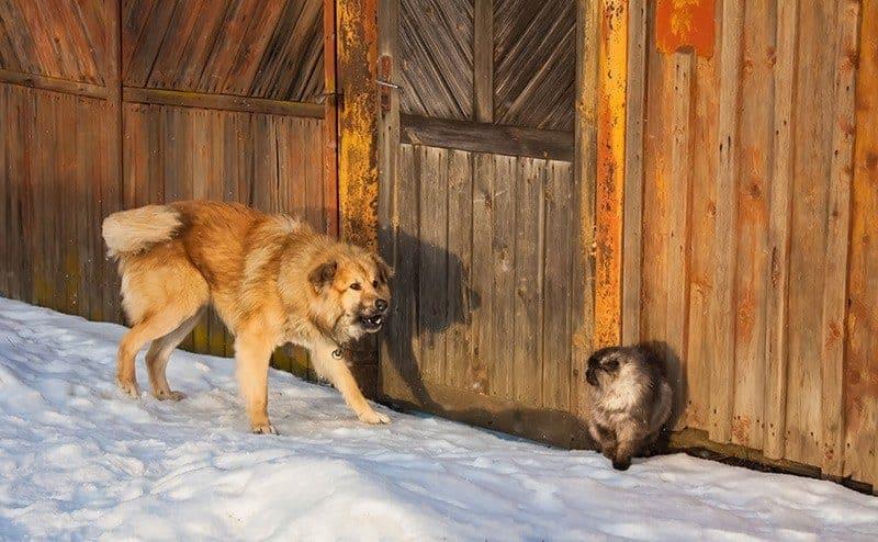 Agresja u psa wobec innych zwierząt