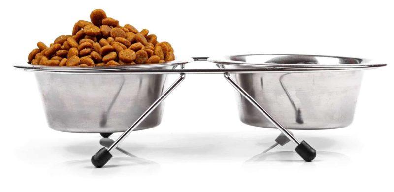 Dieta cukrzycowa dla psa i kota: czym karmić, a czego unikać?
