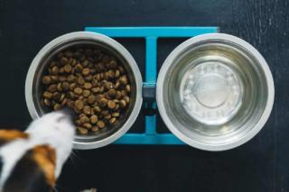 Dieta nerkowa dla psa i kota