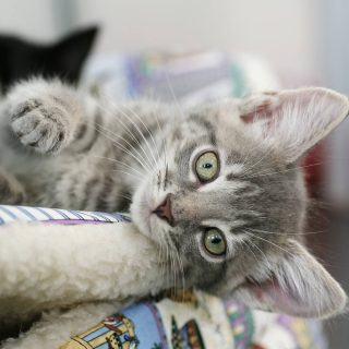 Drugi kot w domu
