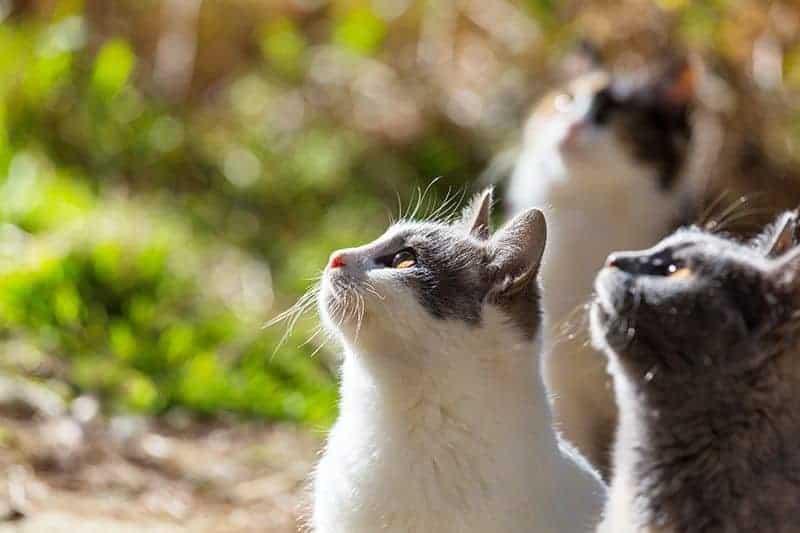 Jakie są zalety posiadania kilku kotów?