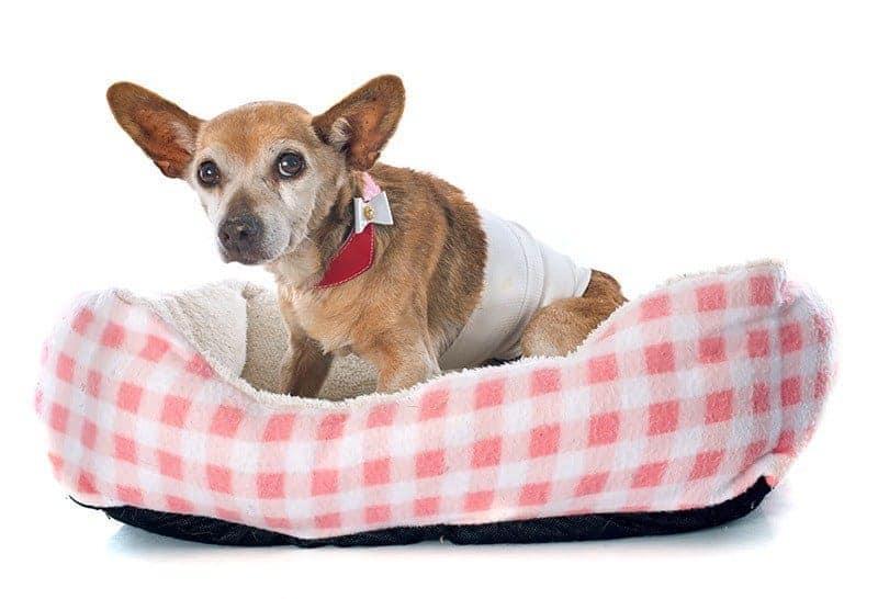 Jak opatrzyć ranę u psa?