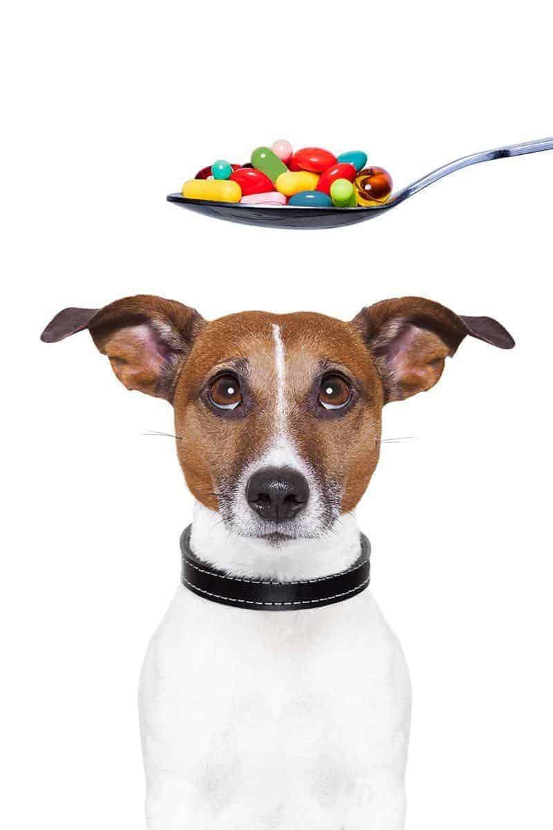 Kiedy stosować suplementy dla psa?