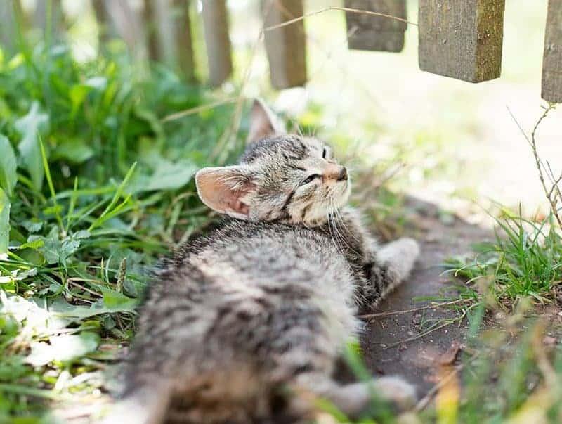 Jak rozpoznać koci katar?